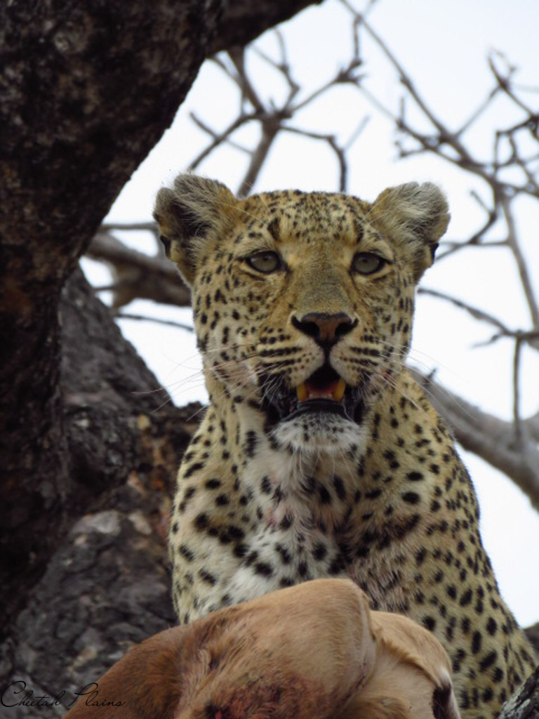 Image by Andrew Khosa